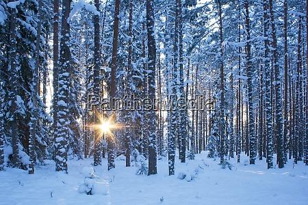 winterwald am abend