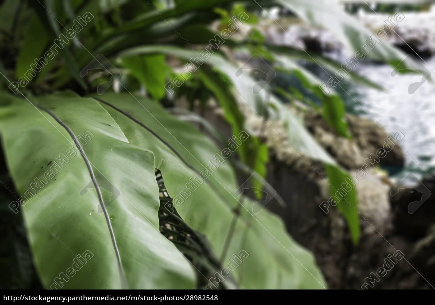 grüne, pflanzen, fühlen, sich, frisch, an - 28982548