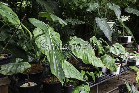 grüne, pflanzen, fühlen, sich, frisch, an - 28982666