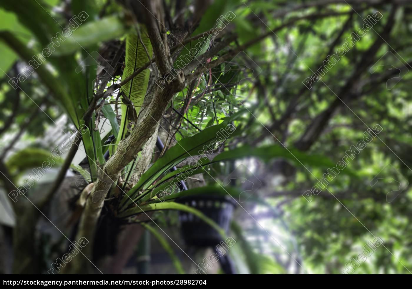 grüne, pflanzen, fühlen, sich, frisch, an - 28982704