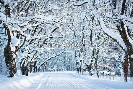 gasse in verschneitem morgen