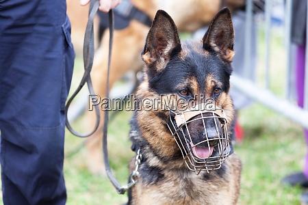 polizist mit polizeihund