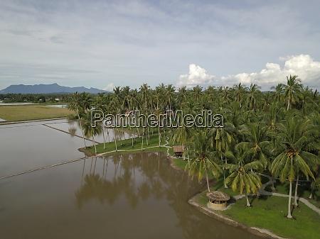 luftaufnahme kokosnussfarm
