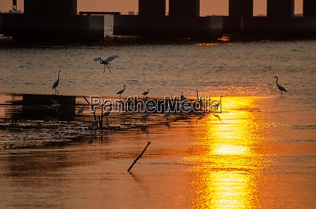 crane, birds, search, food, under, bridge - 29005830
