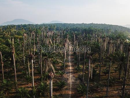 nackte palmenplantage