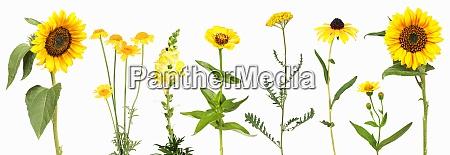auswahl an gelben gartenblumen
