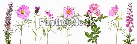 auswahl an rosa gartenblumen