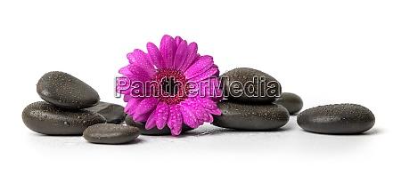 spa und wellness schwarze nassmassagesteine