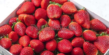 stillleben frischer roter erdbeeren