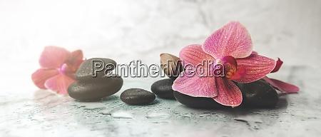 alternative therapie orchidee blumen mit schwarzen