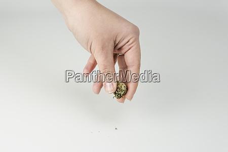 nahaufnahme von frauen hand halten marihuana