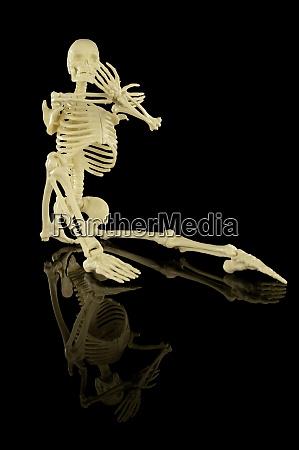 ganzes menschliches skelett