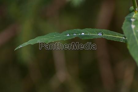 regentropfen auf einem gruenen blatt makro
