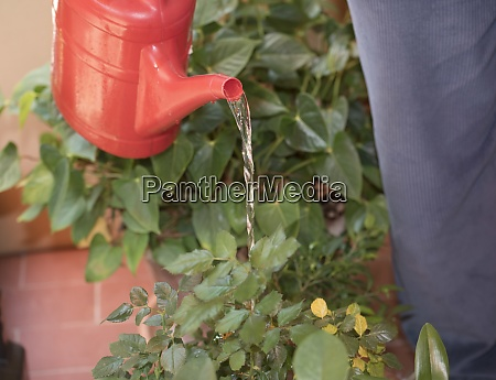 bewaesserungsanlagen mit einer giesskanne