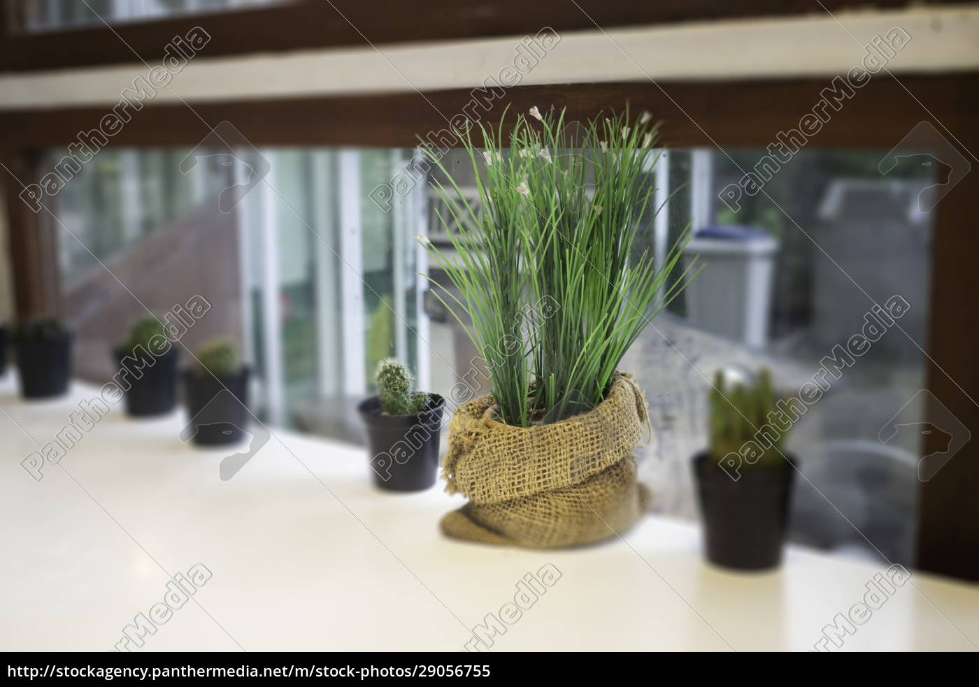 various, of, succulents, and, house, plants - 29056755