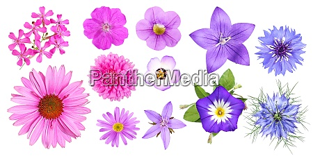 gruppe von verschiedenen rosa violett und