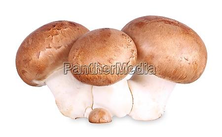 gruppe von braunen pilzen isolierte champignons