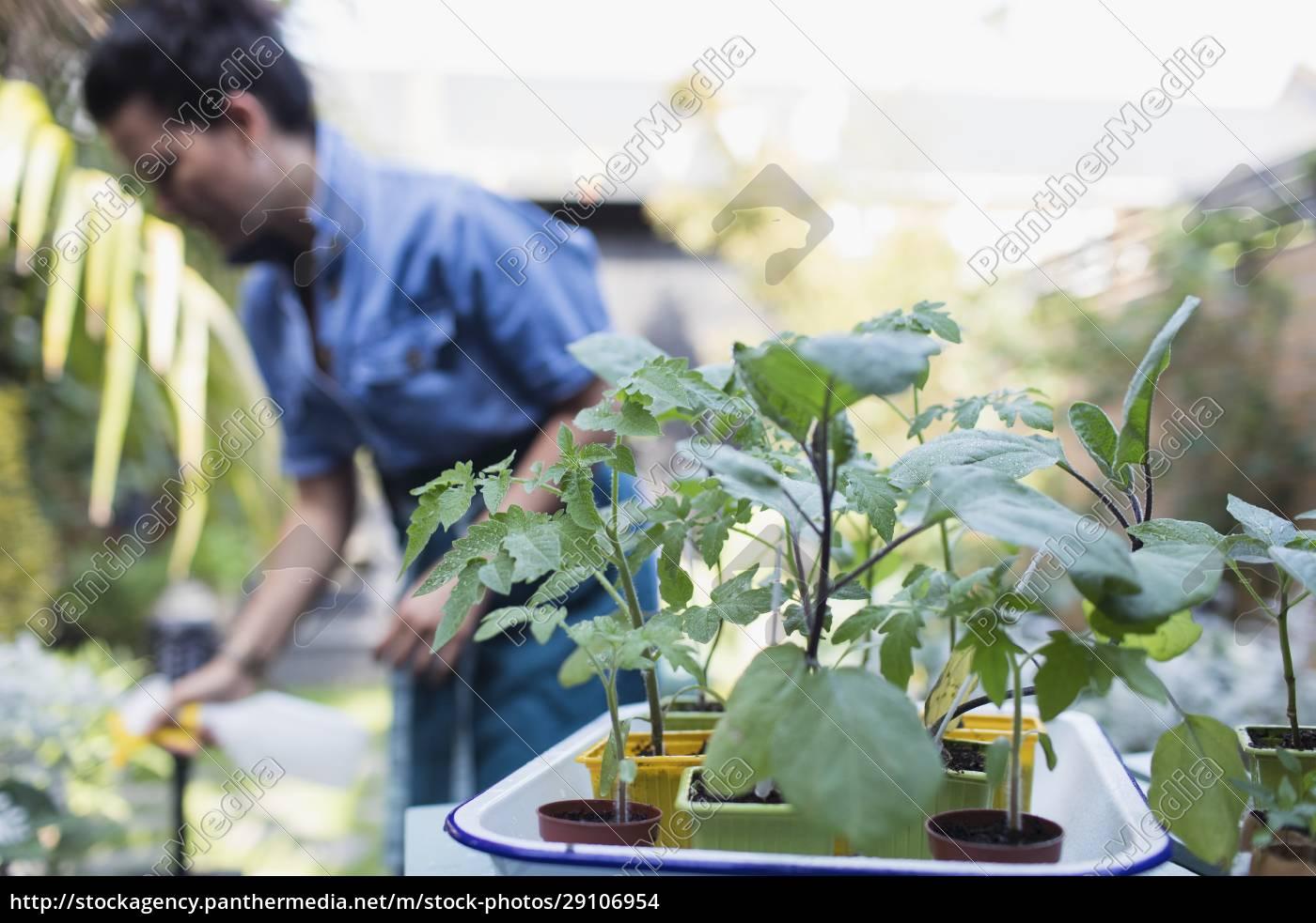 frau, gießt, topfpflanzen, auf, der, terrasse - 29106954