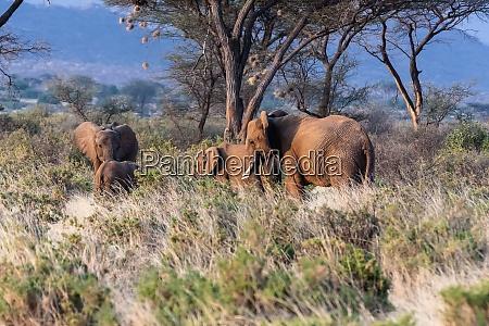 elefantenfamilie kenia afrika