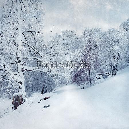 deutschland bei wuppertal winterlandschaft strukturierter effekt