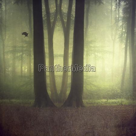 laubwald im sommer digital manipuliert