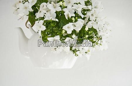 glockenblumen in einer alten teekanne