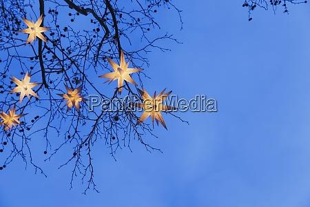 beleuchtete weihnachtssterne haengen in AEsten