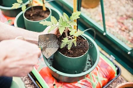 nahaufnahme des mannes der saemlinge pflanzt