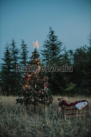 beleuchteter weihnachtsbaum auf grasland gegen klaren
