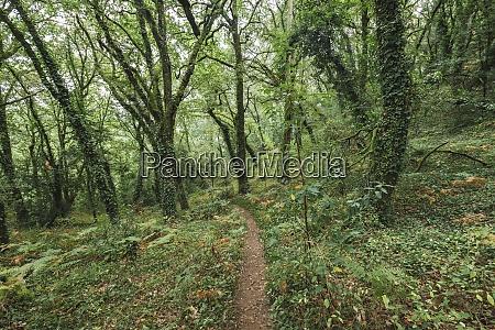 fußweg, inmitten, grüner, pflanzen, und, bäume, die - 29125222