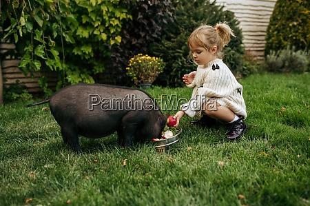 kind, füttert, schwarzes, schwein, im, garten, kümmert - 29208334