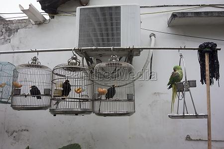 vogelkaefig oder vogelhaus fuer die unterbringung