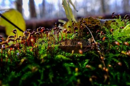 kleine braune pflanzen in einem gruenen