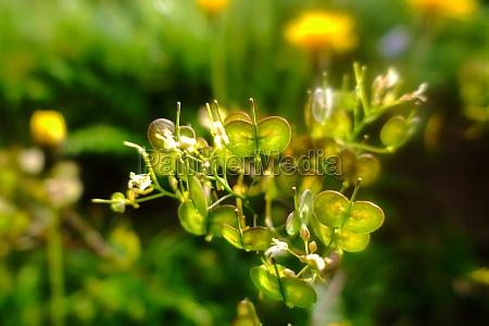 schoene gruene pflanze in den bergen