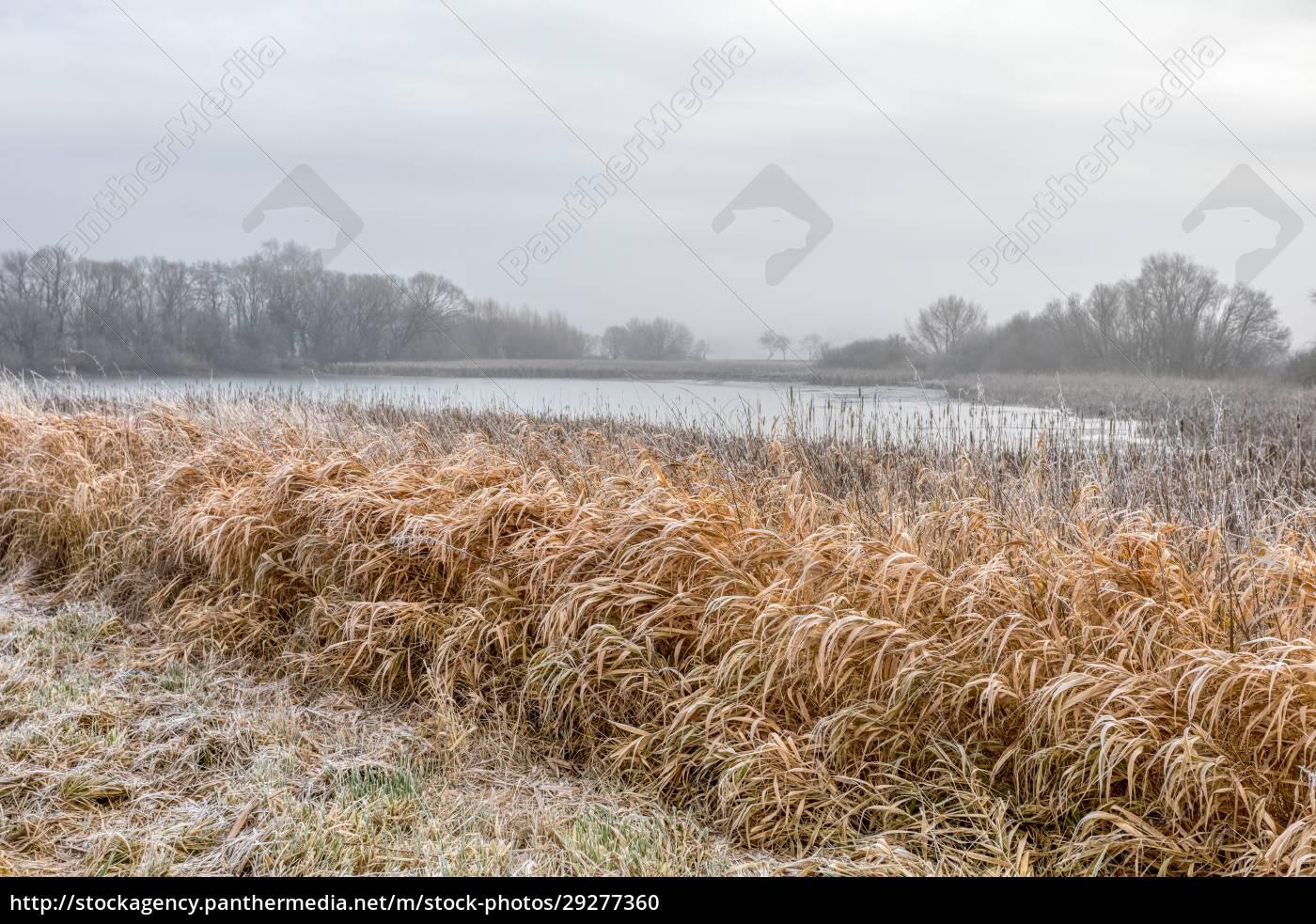 winterlandschaft, mit, schnee, bedeckt - 29277360