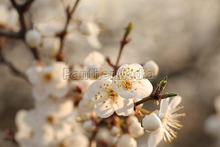 fruehlingsblumen