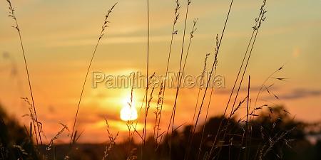 orangener sonnenuntergang mit graesern im vordergrund