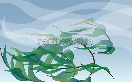 pflanzen die im wind wehen