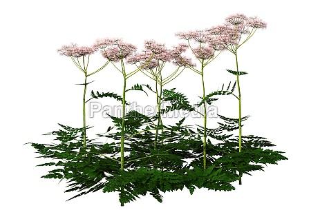 3d rendering kuh petersilie pflanzen auf