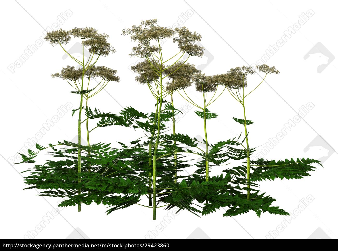 3d, rendering, cow, parsley, plants, on - 29423860