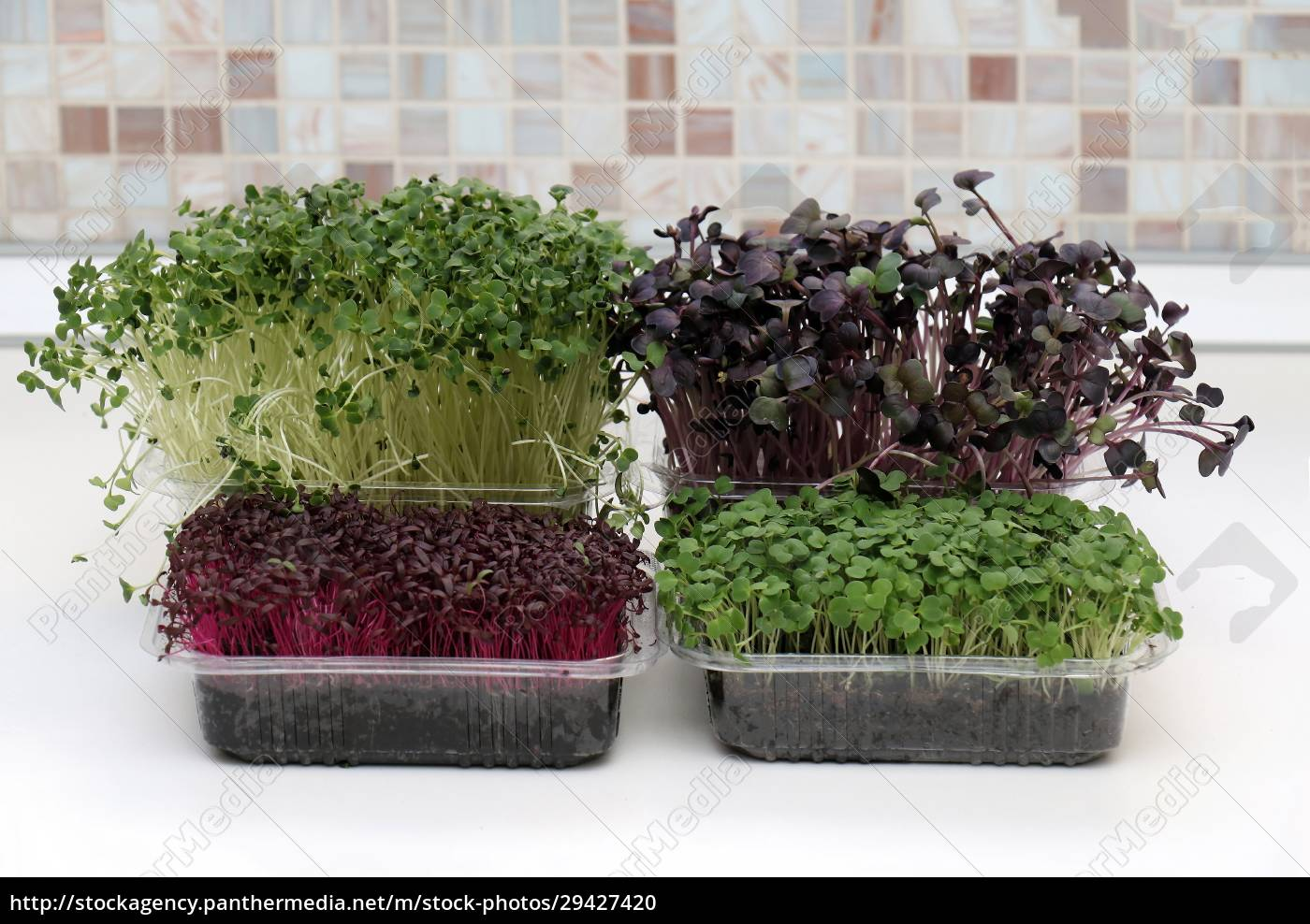 plastic, containers, with, microrgreens, plants - 29427420