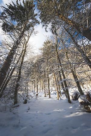 winterlandschaft in der natur fussweg verschneite