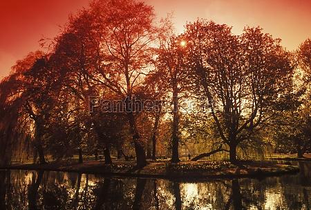 reflexion, von, bäumen, im, wasser - 29461453