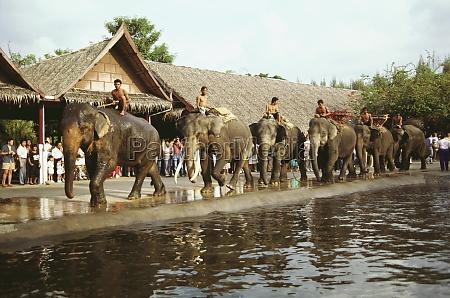 elefanten in einer parade bangkok thailand