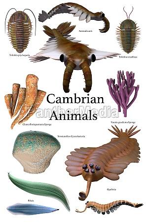 kambrium tiere