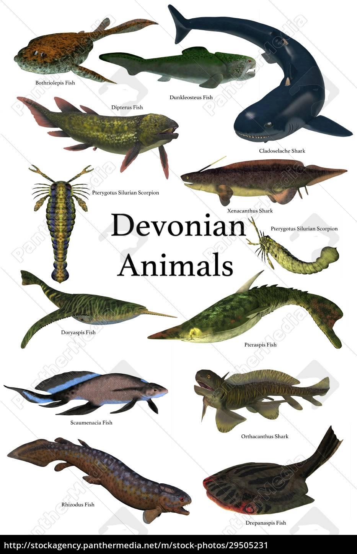 devonian, animals - 29505231