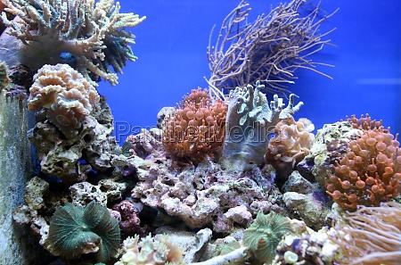 korallenriff aquarium tank