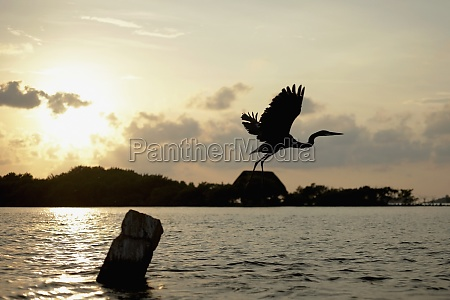 silhouette eines fliegenden vogels