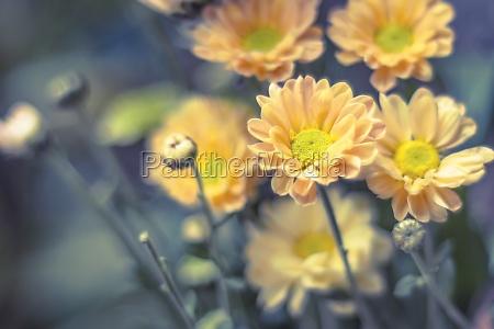 wohnkultur gelbe fruehlingsblumen in einer vintage