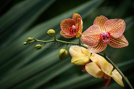 gelbe und orange orchidee gegen gruene